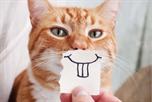 Smile kat