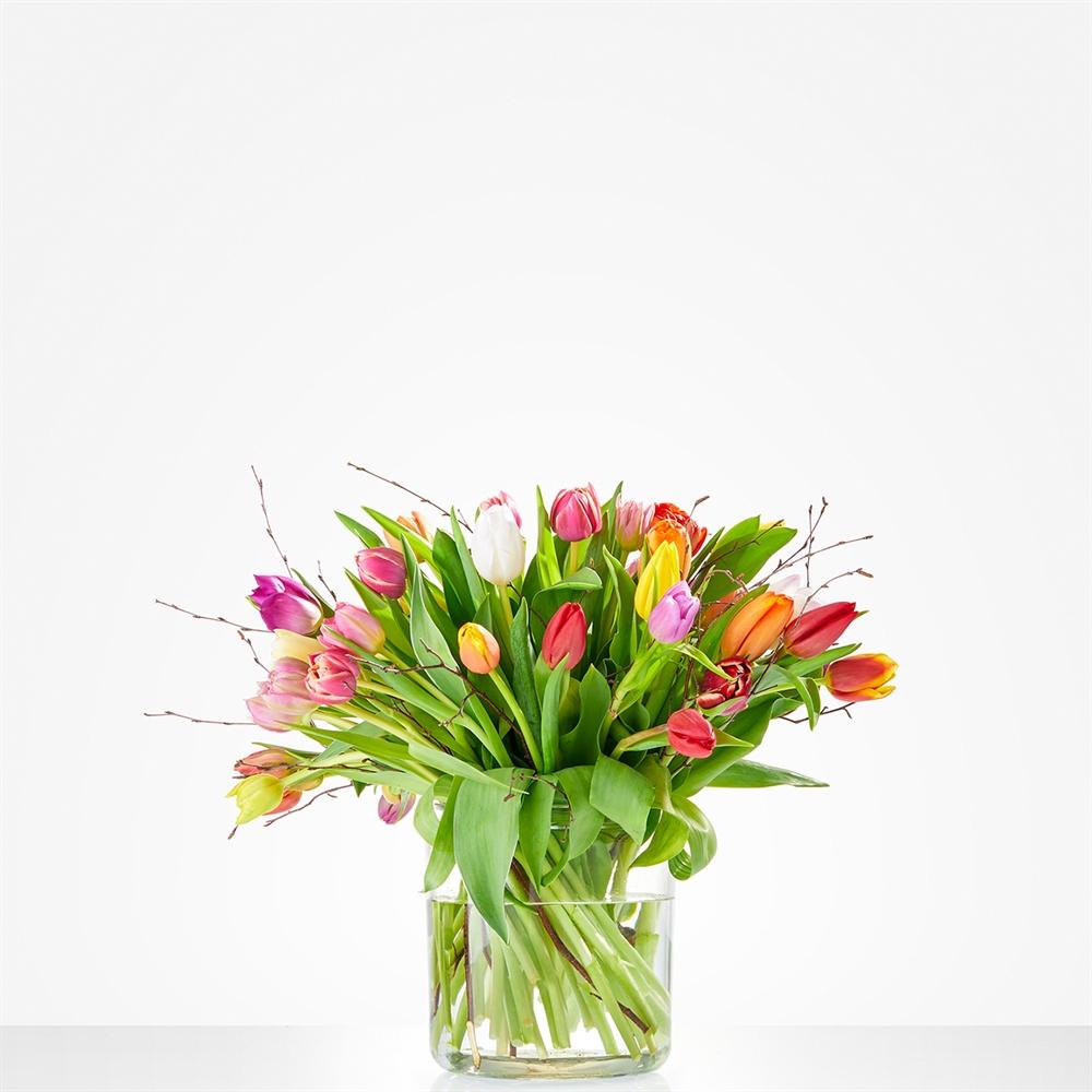 Kleurrijke tulp